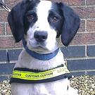 Sniffer dog Casey, who found 250,000 illegal cigarettes in a lorry arriving at Dublin Port on a boat from Rotterdam (Revenue Customs Service/PA)