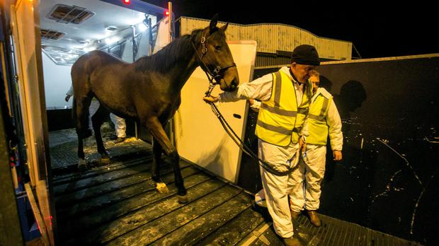 A thoroughbred horse being transported to a Boeing 747 cargo plane from Shannon airport (Bridge PR/PA)