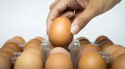 Omega-3 enriched chicken and eggs are an alternative to eating oily fish