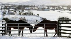 Horses in a field in Cloughoge, Newry.