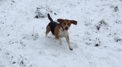 Hugo playing in the snow. (RSPCA Cymru/PA)