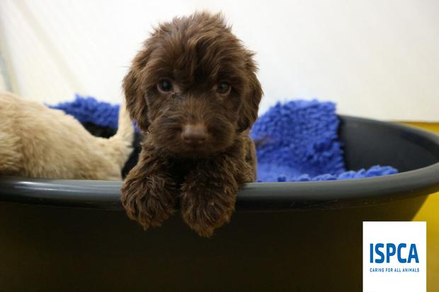 Nearly 90 dogs rescued from puppy farm - Independent ie