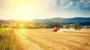 'Traditionally Irish farmers would save and share their seeds for crops' (stock photo)