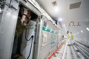 The horses were airlifted from Shannon Airport, and will be trained to race in Asia Photo: Arthur Ellis