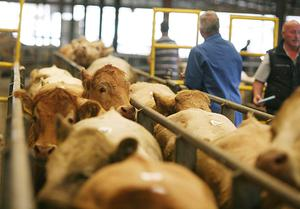 Numbers game: The beef kill for the last week in March stood at 32,773