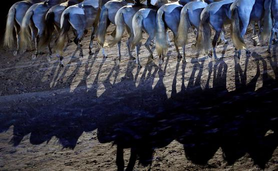 A rider performs with his horses during the opening ceremony