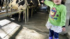 MILKY WAY: Glanbia has a strong global business, in addition to the milk sector