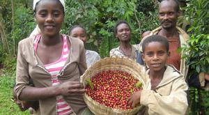 Coffee is largely produced by subsistence farming, and depends on low-paid farmers to harvest it