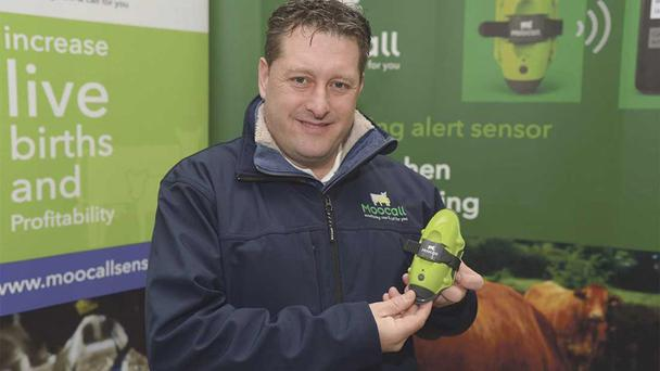 Moocall chief executive Emmet Savage says that their hi-tech product has a 95pc success rate in terms of predicting calving