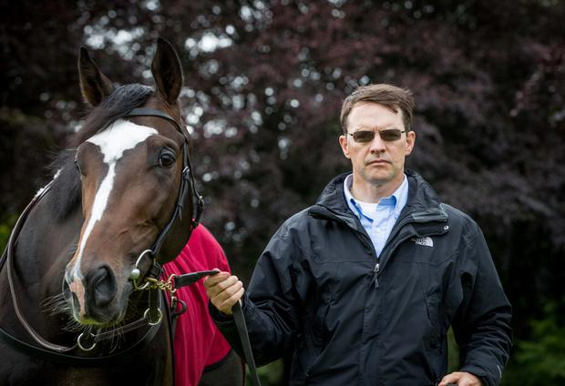 Image result for aidan o'brien trainer