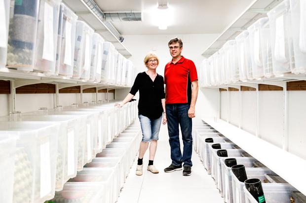Kirsi and Jouko Siikonen in a growth room on their farm in Forssa, Finland, where they grow crickets. Photo: Bloomberg