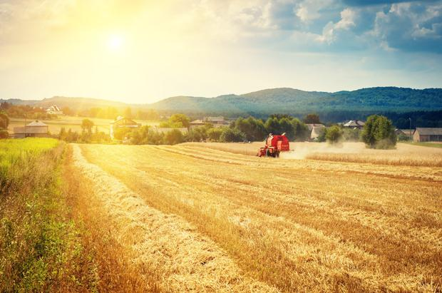 Hot, dry summer weather raised fears about shrunken yields, before rain and snow in September stalled field work.Photo: Stock image