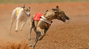 Graham Holland won both races on the card and his Riverside Larry was came in at 28.44 in the opening heat of the Comerford Cakes. Stock image