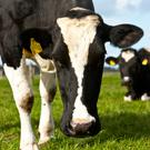 The Chinese market opened to Irish beef in June 2018 and demand has been strong. Stock image