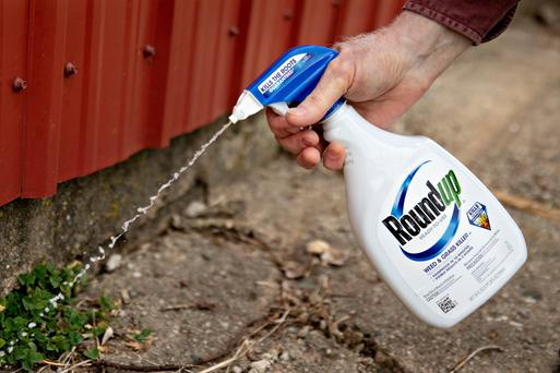 More than 11,200 lawsuits in the US are linking Roundup to cancer. Photo: Bloomberg