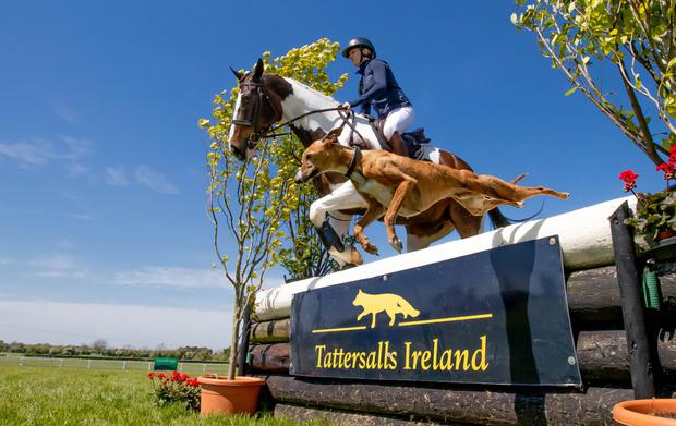 Next week's Tattersalls International Horse Trials & Country Fair will see the biggest ever movement of competition horses across the Irish Sea