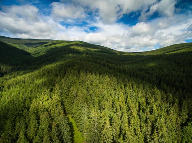 Gresham House, which is now managing 10,000 acres of forest here, plans to open an Irish office