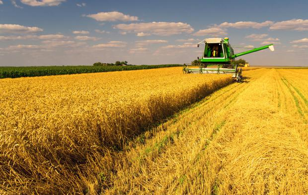 Leading the field: the agriculture sector was the biggest borrower from the SBCI with 29.4pc of lending (stock photo)