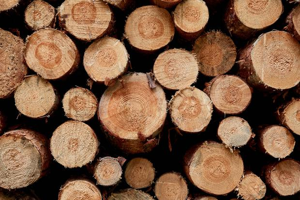 Thousands of investors in funds that revolved around Irish forestry have been handed returns that were far lower than they had initially been expecting, prompting some to consider taking legal action over the outcome.