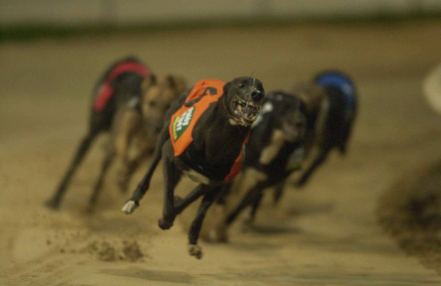 On the run: Shelbourne Park staged 200 race meetings last year