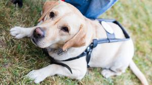 The extra red tape has affected people travelling with guide dogs