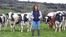 Sophie Bell pictured on the farm at Drumgora outside Virginia, Co. Cavan;  (below) Sophie milks 200 cows a day and also does a lot of the work with the calves. Photos: Lorraine Teevan