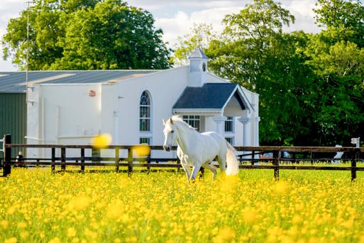 Thornton Park Equestrian Centre is set on 14 acres in Kilsallaghan, County Dublin, and comes with a guide price of €1.4m