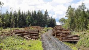 Timber industry is at risk over licences. Photo: Alf Harvey