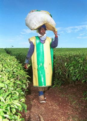 Reforms: A worker at the Brooke Bond plantation in Kericho, Kenya