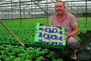 MARTIN JONES: Ireland's lettuce king grows 8m heads of crunchy salad a year in Rush