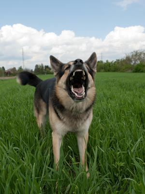 Liability for dogs has separate rules