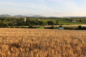 Land in Ballintotty, Co. Tipperary