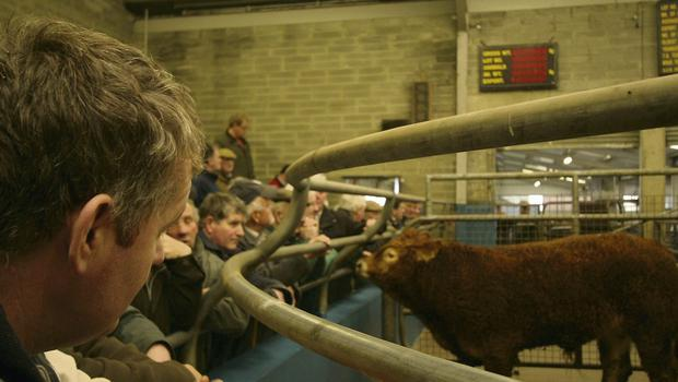 Concern: FBD currently insures 80pc of marts in Ireland and admits they are a loss-making sector for them