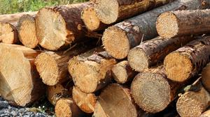 'The Sunday Independent reported in April that at least 2,000 forestry jobs were under direct threat because of a licensing and appeals logjam that threatened to bring the entire sector to a halt.' (stock photo)