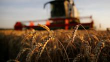 A farmer harvests wheat during sunset.