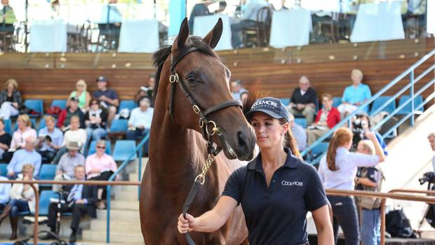 Orla Donworth says the highlight of her time in Australia was taking Coolmore's top priced yearling through the sales ring. This Fastnet Rock filly sold to Adrian Nicholl of BBA Ireland for Auz$1.3 million (€900,000)
