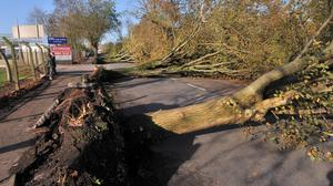 The ESB can remove potentially dangerous trees or compel landowners to do so
