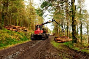"""The EIB said the method makes forests more resilient to pests and disease, """"as well as avoiding the negative impacts on soil and water resources of conventional practices"""". Photo: ROGER JONES PHOTO"""