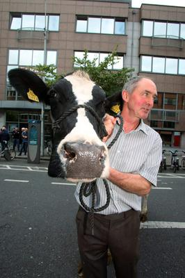 John Murphy from Newcastle, Co Dublin, with Sylvia, one of his cows, at yesterday's farmers' protest in Dublin city centre