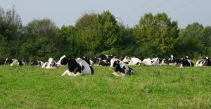 Some dairy farmers might find greater potential for profit from their existing herd rather than chasing scale and volume with all of its associated costs such as stock, infrastructure, labour and land rental.