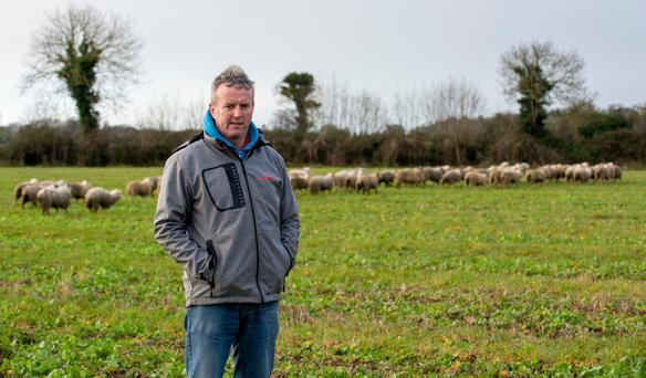 Speaking out: Damien Hanratty has appealed to members of the public to report dangerous dogs. His flock of sheep, at Togher, Co Louth was attacked by dogs last month. Photo: Ciara Wilkinson