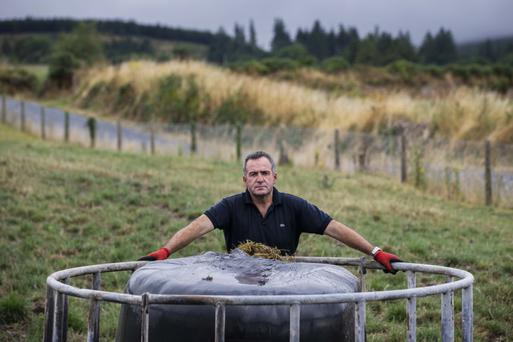 Maurice Walsh on the family farm near Mitchelstown, Co Cork. Photo: Clare Keogh