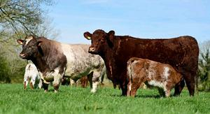 Setting high standards: Some of the super shorthorns in Tommy Staunton's Herd in Co Galway