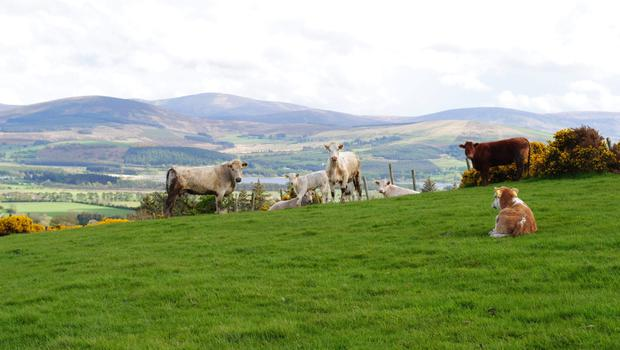Green acres: The 69ac holding at Slate Quarries, Blessington is 'excellent grazing ground'.