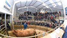 A panoramic view of the action at Carnew Mart.