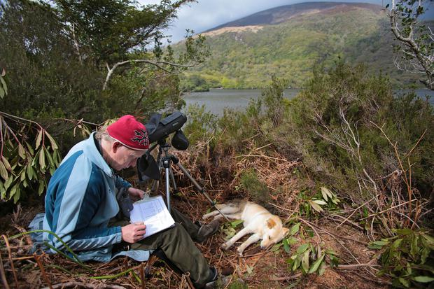 Dr Allan Mee observing the White-Tailed Eagle nest from a safe distance on Lough Lein, Killarney, Co Kerry. Photo:Valerie O'Sullivan/White Tailed Eagle Project