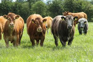 A 15pc drop in cattle prices would cattle rearing incomes fall by 60pc to €3,756, while a 10pc reduction in cattle prices would result in a 39pc fall in incomes to €5,689.