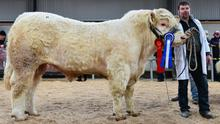 Islandview Mr T, Reserve Champion and second highest price bull, with exhibitor,  Tommy Mc Laughlin from Lifford, Co. Donegal.  The bull sold for €6,400.