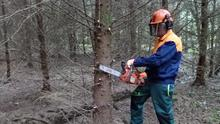 Safety: Anyone using a chainsaw must wear the correct PPE - no matter how small the job. Photo: Teagasc