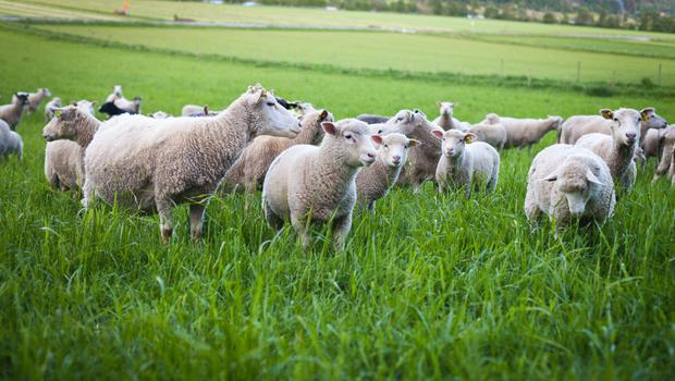 Now is the time to stock up with all the lambing needs